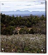 Draney Orchard Pano Acrylic Print