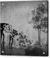 Dream 5111a Acrylic Print
