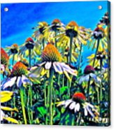 Dream Field Acrylic Print