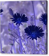 Dream Fields Acrylic Print
