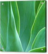 Dream Green Acrylic Print