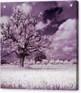 Dream Tree Acrylic Print