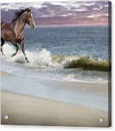 Dreamer On The Beach Acrylic Print