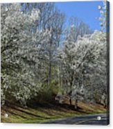 Dreamin' Of A White Spring No.5 Acrylic Print