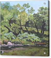 Dreaming By The Creek Acrylic Print