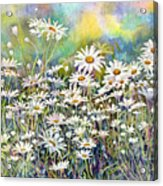 Dreaming Daisies Acrylic Print