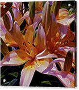Dreaming Of Lilies 5 Acrylic Print