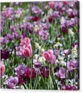 Dreaming Of Tulips Acrylic Print