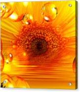 Dreams 2 - Gerbera Sunrise Acrylic Print