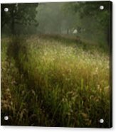 Dreams Of Grass Acrylic Print