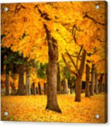 Dreamy Autumn Day Acrylic Print
