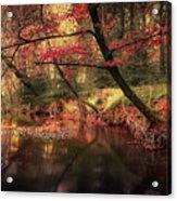 Dreamy Autumn Forest Acrylic Print