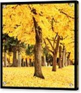 Dreamy Autumn Gold Acrylic Print
