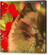 Dreamy Cat With Geranium 2015 Acrylic Print