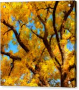 Dreamy Crisp Autumn Day Acrylic Print