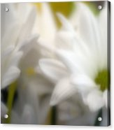 Dreamy Daisies Acrylic Print
