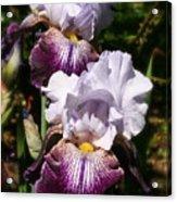 Dreamy Irises Acrylic Print