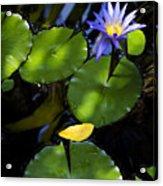 Dreamy Lotus Acrylic Print