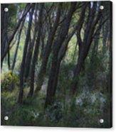 Dreamy Marjan Forest In Croatia Acrylic Print