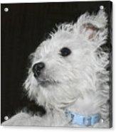 Dreamy Puppy Acrylic Print