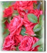 Dreamy Red Roses - Digital Art Acrylic Print