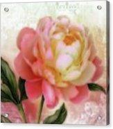 Dreamy Rose Acrylic Print