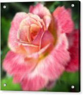 Dreamy Rose Acrylic Print