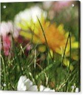 Dreamy Spring Acrylic Print