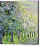 Dreamy Trees Acrylic Print