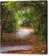 Dreamy Walk Acrylic Print
