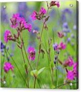 Dreamy Wildflowers Acrylic Print