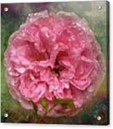 Drenched Acrylic Print