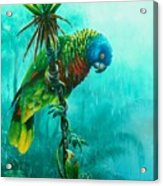 Drenched - St. Lucia Parrot Acrylic Print