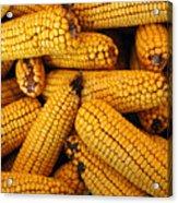 Dried Corn Cobs Acrylic Print