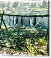 Dried Fish Acrylic Print