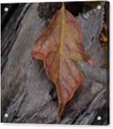 Dried Leaf On Log Acrylic Print
