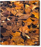 Dried Leaves Acrylic Print