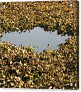 Dried Leaves In A Pond Acrylic Print