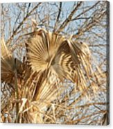 Dried Palm Fronds In The Wind Acrylic Print