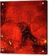 Dried Red Pepper Acrylic Print