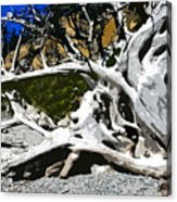 Drift Wood Acrylic Print