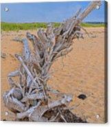 Drift Wood On The Beach Acrylic Print