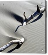 Drifting Sand Acrylic Print