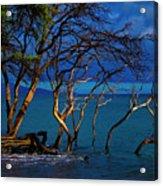 Driftwood 01 Acrylic Print
