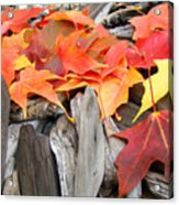 Driftwood Autumn Leaves Art Prints Baslee Troutman Acrylic Print