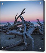 Driftwood Beach 1 Acrylic Print