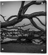 Driftwood Beach 4 Acrylic Print