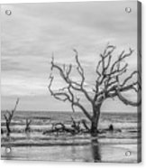 Still Standing In Black And White Acrylic Print