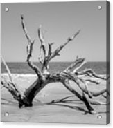 Driftwood Beach In Black And White Acrylic Print