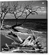 Driftwood Bw Fine Art Photography Print Acrylic Print
